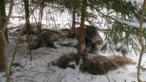 Pilt räägib rohkem kui tuhat sõna. «Metsas valitses haudvaikus ja laibalehk,» kirjeldas Pikasilla lähedal metsas avanevat pilti selle lehele saatnud inimene. Foto: Erakogu